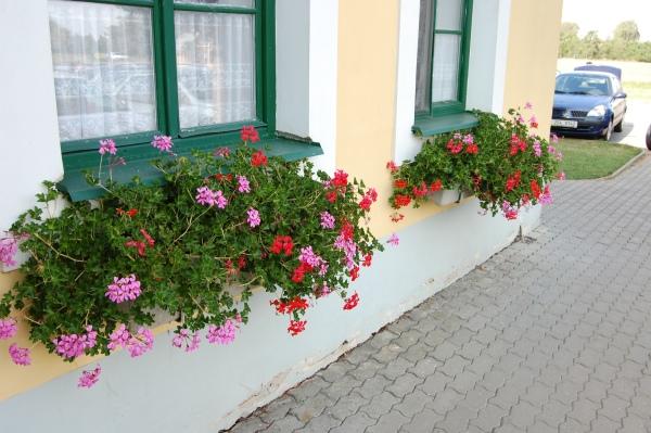Balkonové květiny do truhlíků