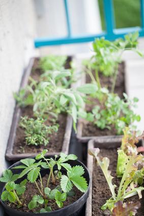 Pěstujeme bylinky na balkoně