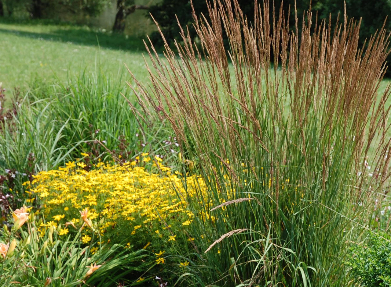 Okrasné trávy 1