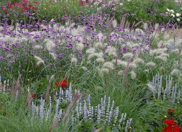 Okrasné trávy ve výsadbě