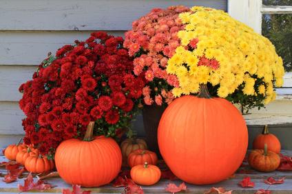 Podzimní dekorace - dýně