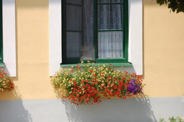 Truhlík na okně