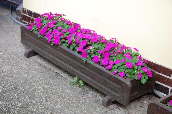 Balkonové květiny v truhlíku