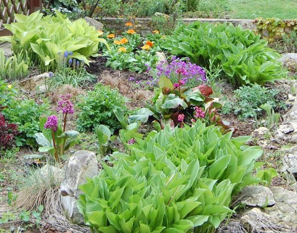 Trvalky vhodné k vegetativnímu množení v létě